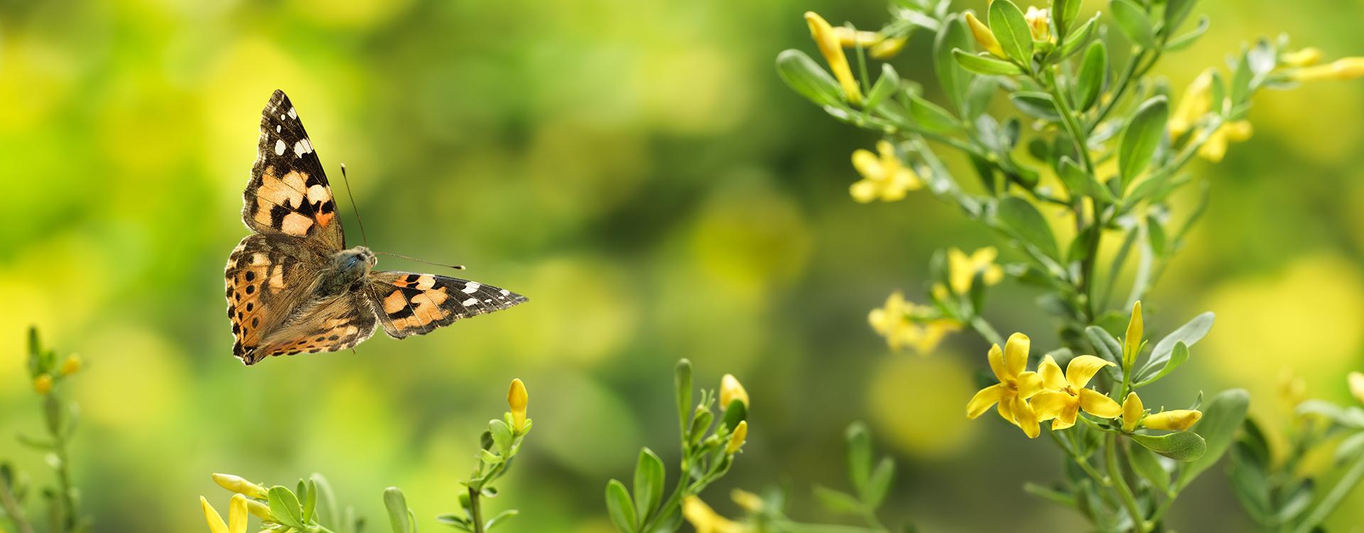 papillon_nature vegetal IO