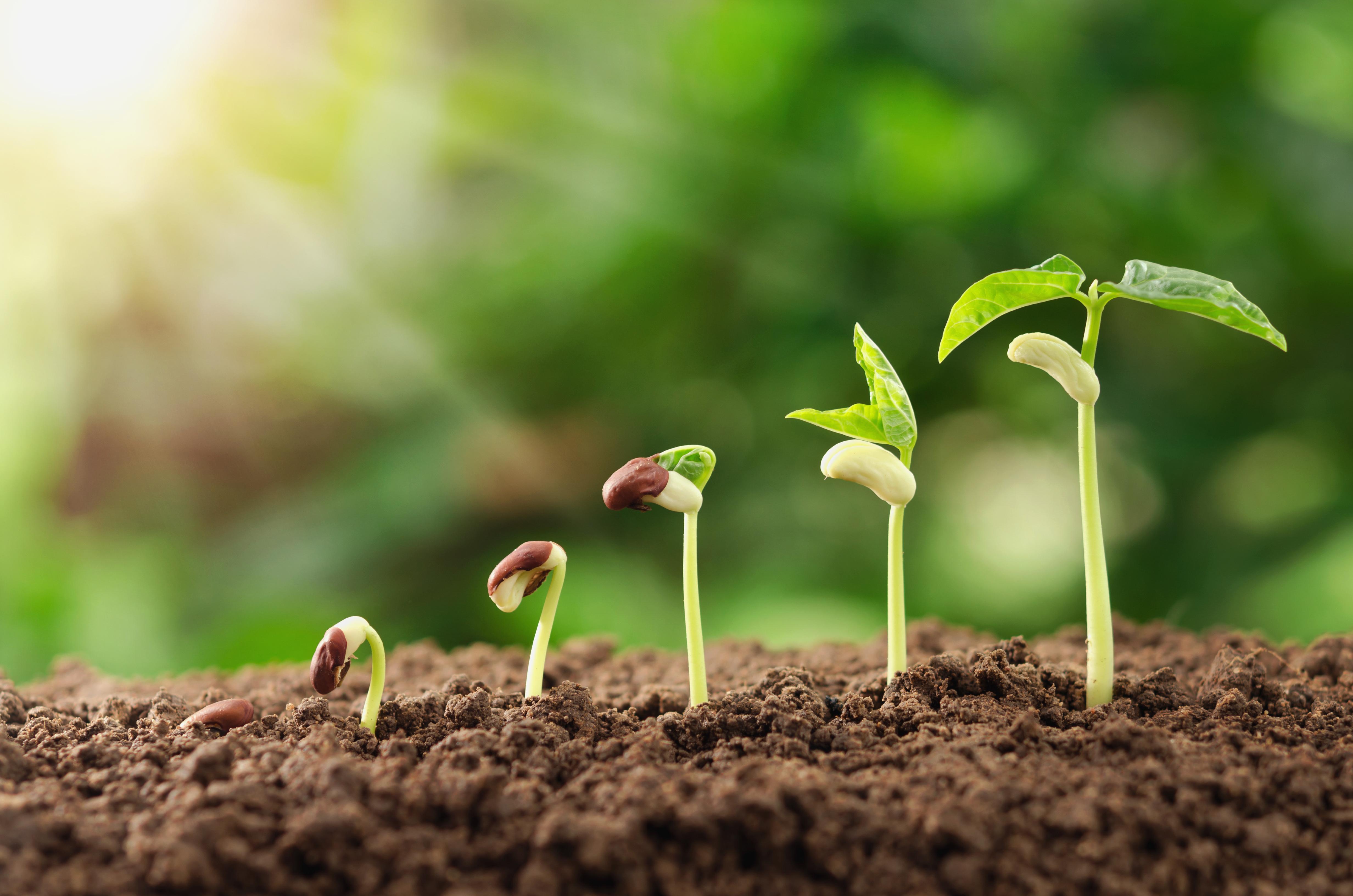 jeunes pousses agriculture