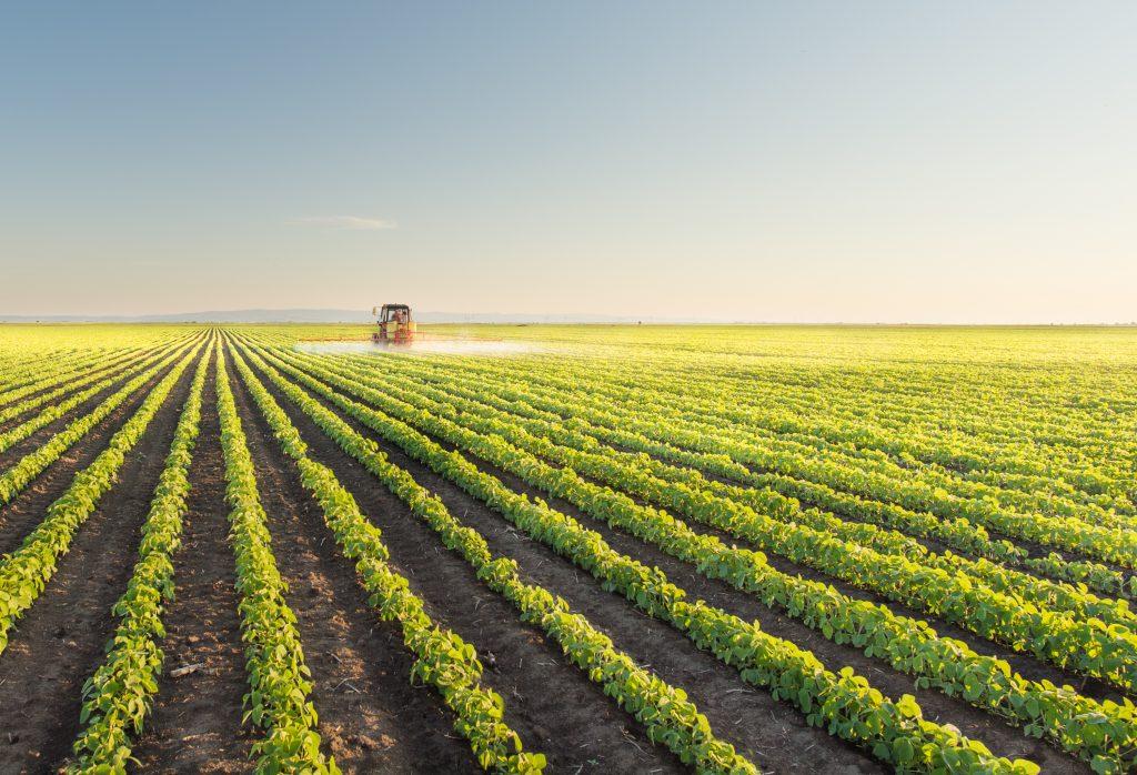 champ pour représenter le secteur de l'agriculture